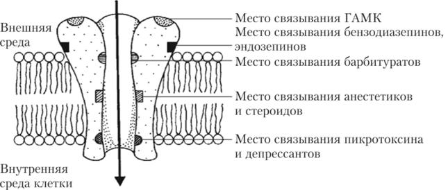 Схема постсинаптического рецепторного комплекса ГАМК-рецептора