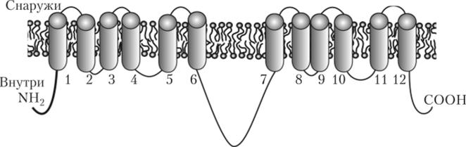 Мембранные транспортеры обозначение элеватора на принципиальной схеме