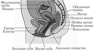 vagina-do-sozrevaniya-samoe-vozbuzhdayushee-lesbiyskoe-porno