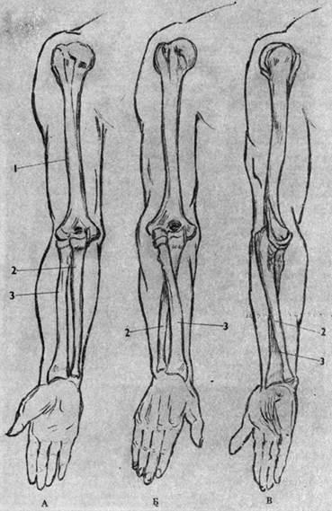 Пронация предплечья и плеча (схема)
